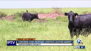 Okeechobee County residents concerned about proposed livestock auction market - Video