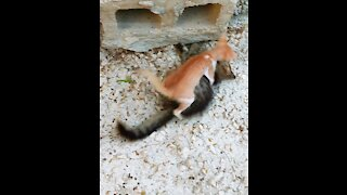 Two cute cats playing together