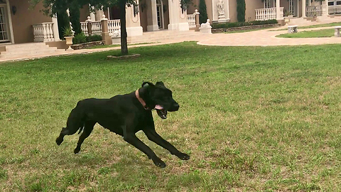 Adopted Pup Experiences Her First Run Off Leash And It Is Beautiful