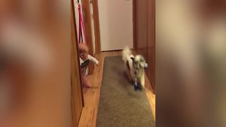 Excited Dog Playing Fetch Gives Baby All The Giggles - Video