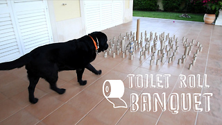 Dog hits the jackpot with epic toilet roll banquet - Video