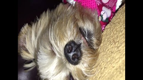 Creepy – Pup Keeps Eyes Open when she Sleeps