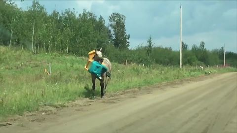 Funny Horse Runs With A Toy Car On His Neck