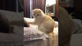 Kitty Does Best Impression of an Alarm Clock - Video