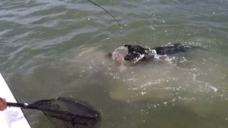 Dog Tries A Catch A Fish During A Fishing Trip