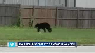 WATCH | Bear spotted running around Avon Park