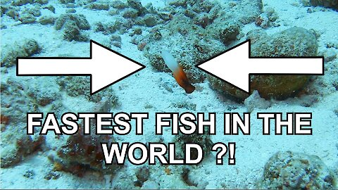 Is this the fastest fish in the world?