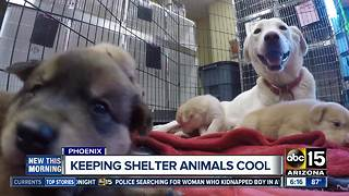 Arizona Animal Welfare League gets big gift to keep shelter animals cool - Video