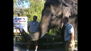Ready For A Car Wash Done By An Elephant?