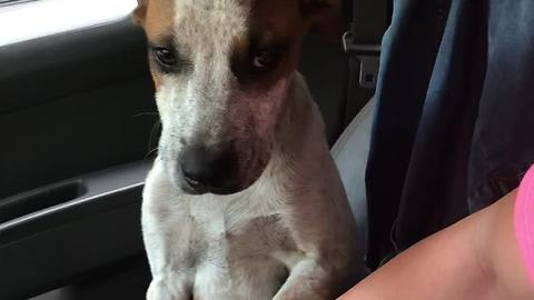 Stray Dog Shows Genuine Gratitude After Being Rescued