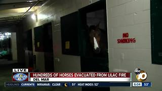 Hundred of horses evacuated from Lilac Fire - Video