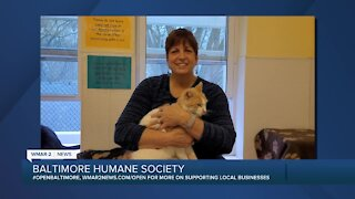 Wonder and Inky the cats are up for adoption at the Baltimore Humane Society