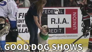 Good Dog Shows Hockey Referees How It's Done - Video