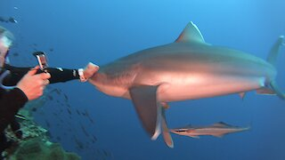 Fearless scuba diver fends off aggressive shark with her bare fist
