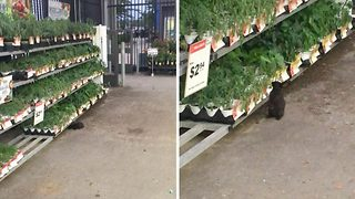Cheeky bunny! Video shows rabbit nibbling herbs in supermarket - Video