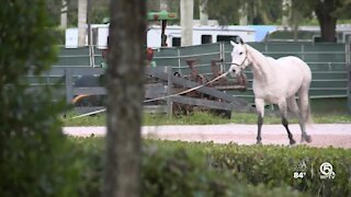 Wellington horse competitions return with coronavirus rules