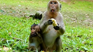 Monkey Eat Food Not Give Baby Some - Video