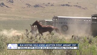 BLM wild horse adoption event