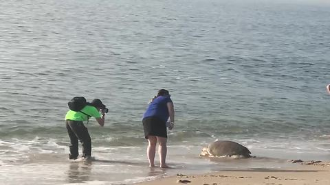 Rescued sea turtle released back to the ocean
