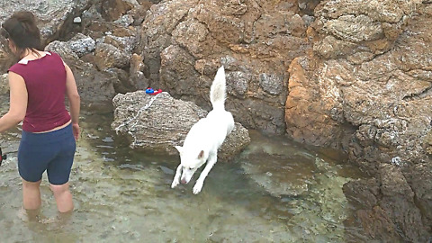 Husky Reaction First Time on the Rocks by the Sea