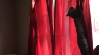 Random Cat Found In House Freaks Out - Video