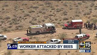 Worker attacked by hundreds of bees from old couch in Peoria - Video