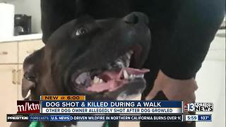 Man warns neighbors after dog shot and killed on walk - Video