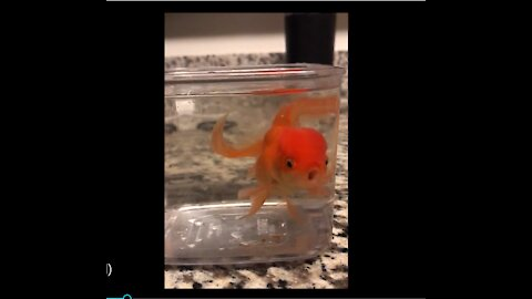 Goldfish demands dog to rescue him from bowl.