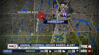 Port Charlotte issues rabies alert