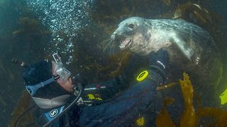 Sealfie – Friendly seal gets playful with diver - Video