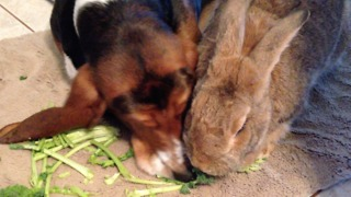Sneaky Dog Has Some Serious Sharing Issues When It Comes To Kale - Video