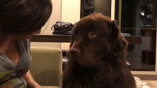 Big Dog Is Having None Of His Owner's Apologies  - Video