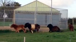Adorable Ponies Can't Stop Going Round In Circles / Pony Merry Go Round - Video