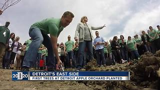 First trees at Detroit apple orchard being planted on Friday