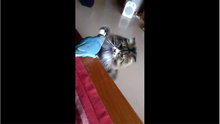 Cat and parrot share very unique friendship