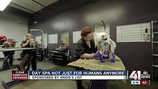 Angie's List: Day spa not just for humans anymore - Video