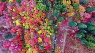 Drone Footage Shows Fall Colors In Northern Utah