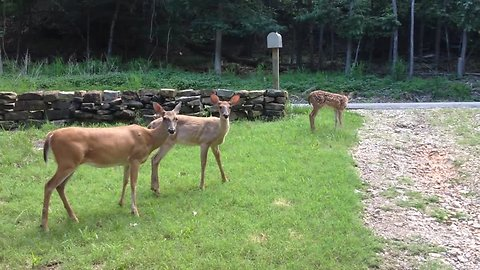 Rescued deer introduces fawn to caretaker