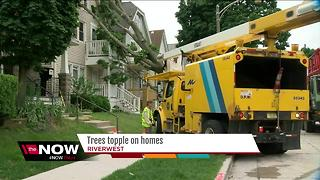 Tree topples on Riverwest homes - Video