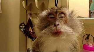 Attention-Seeking Monkey Gets Pampered - Video
