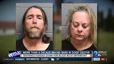 More than a decade behind bars in dogs' deaths