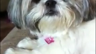 Super cute dog very excited to get groomed - Video