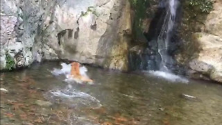 Dog plays fetch in lake!! Under waterfall!  - Video