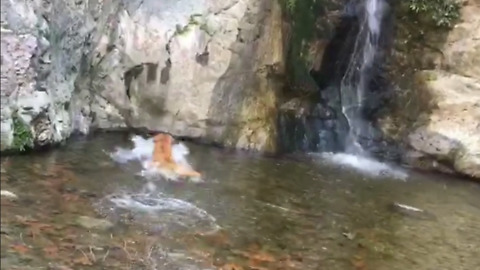 Dog plays fetch in lake!! Under waterfall!