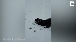 THREE-YEAR-OLD DOG GOES WILD AFTER FIRST SIGHTING OF SNOW AFTER MOVING HOME