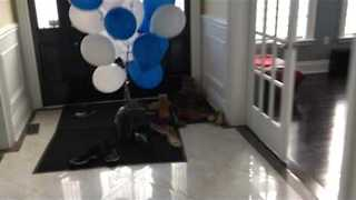 Poor Cat Tries to Escape from Balloons - Video