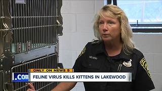 Lakewood Animal Shelter stops cat intakes for two weeks after deadly virus kills five kittens - Video