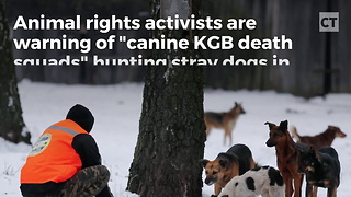 """Report: Russian """"Death Squads"""" Eliminating Stray Dogs"""