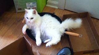 This Fluffy Cat Is Stuck In A Pan - Video
