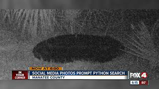 Manatee County searching for Burmese Python - Video